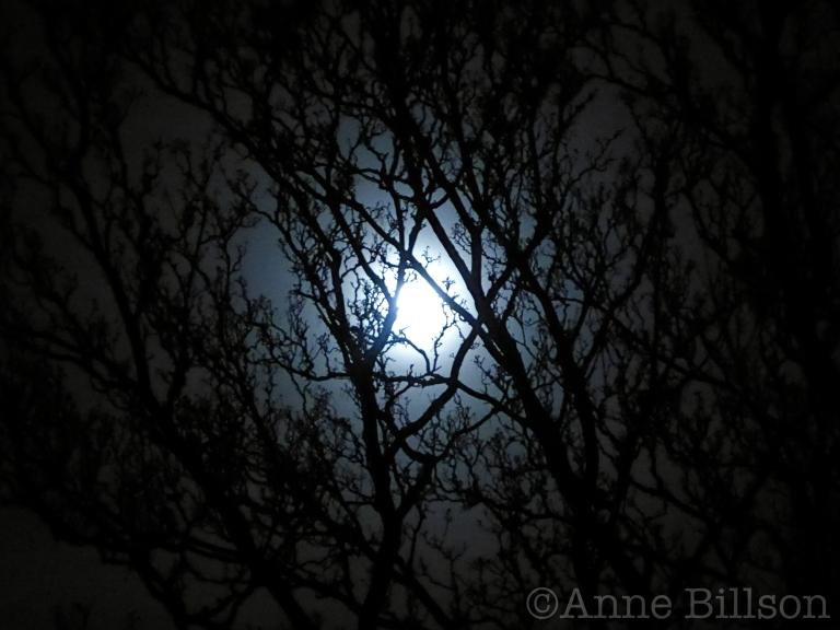 Gevaarlijke maanlicht: Sint-Gillis.
