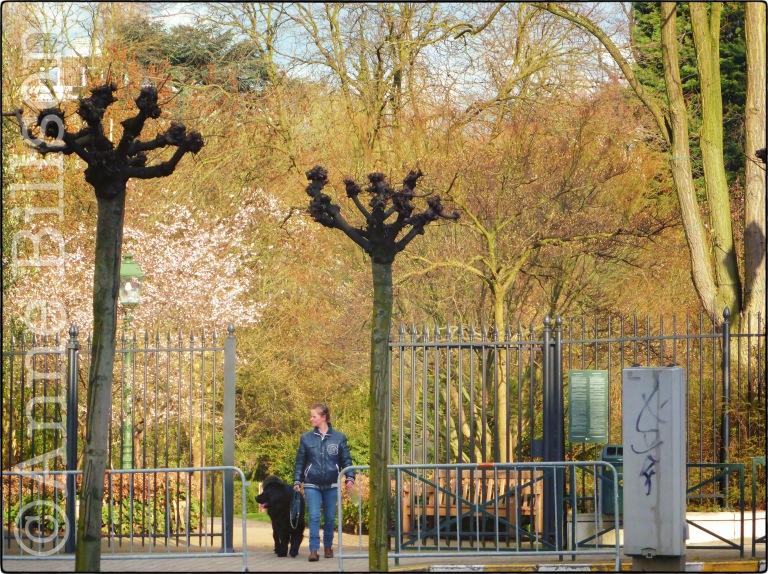 Tenboschpark: Henri Michauxplein, Elsene.