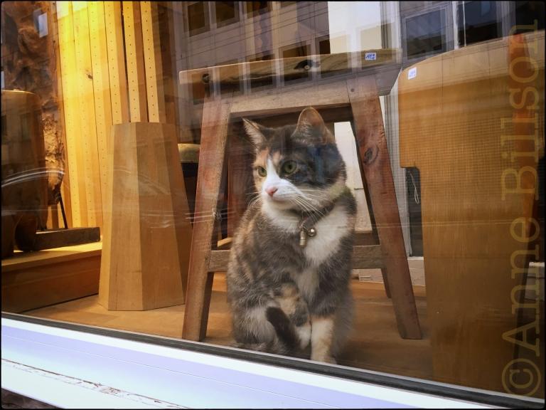 Poesje in het venster: Charleroise Steenweg, Sint-Gillis.