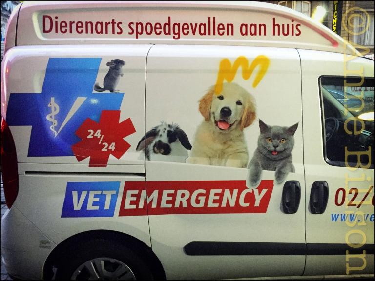 Dierenarts bestelwagen: Baljuwstraat, Elsene.