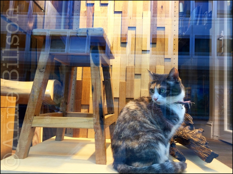 Poesje in venster: Charleroise Steenweg, Sint-Gillis.