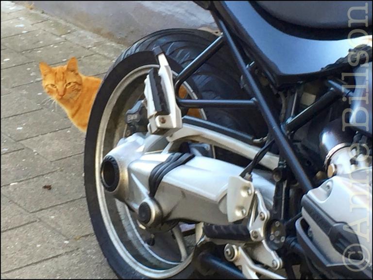 Poesje met motorfiets: Molenstraat, Osteende.