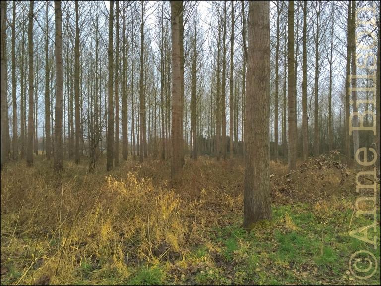 Het bosje: Lessen, Henegouwen.